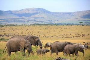 magnificent Africa
