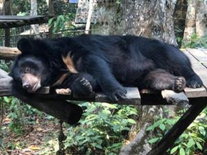 Bear Rescue Centre Luang Prabang