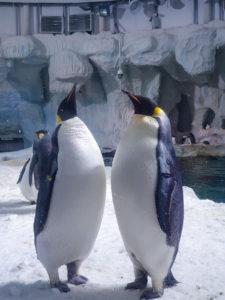 Chimelong Ocean Kingdom Penguin